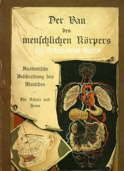 Der Bau des menschlichen Körpers. Anatomische Beschreibung des ...